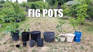 What Size Pots Should You Buy For Figs?
