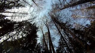 Варган, деревья, солнце