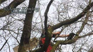 preview picture of video 'De Bilt: Boomverzorger redt kat uit boom'