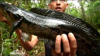 Strike di Hutan Liar Kalimantan - Mancing Liar (24/7)