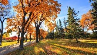 ОСЕНЬ ЗОЛОТАЯ..Осень музыка..Звуки природы #3 Выпуск