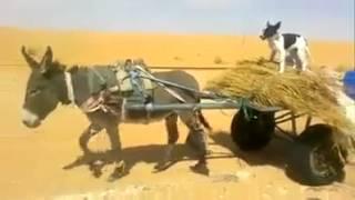 التهريب عبر الحدود الجزائرية الليبية
