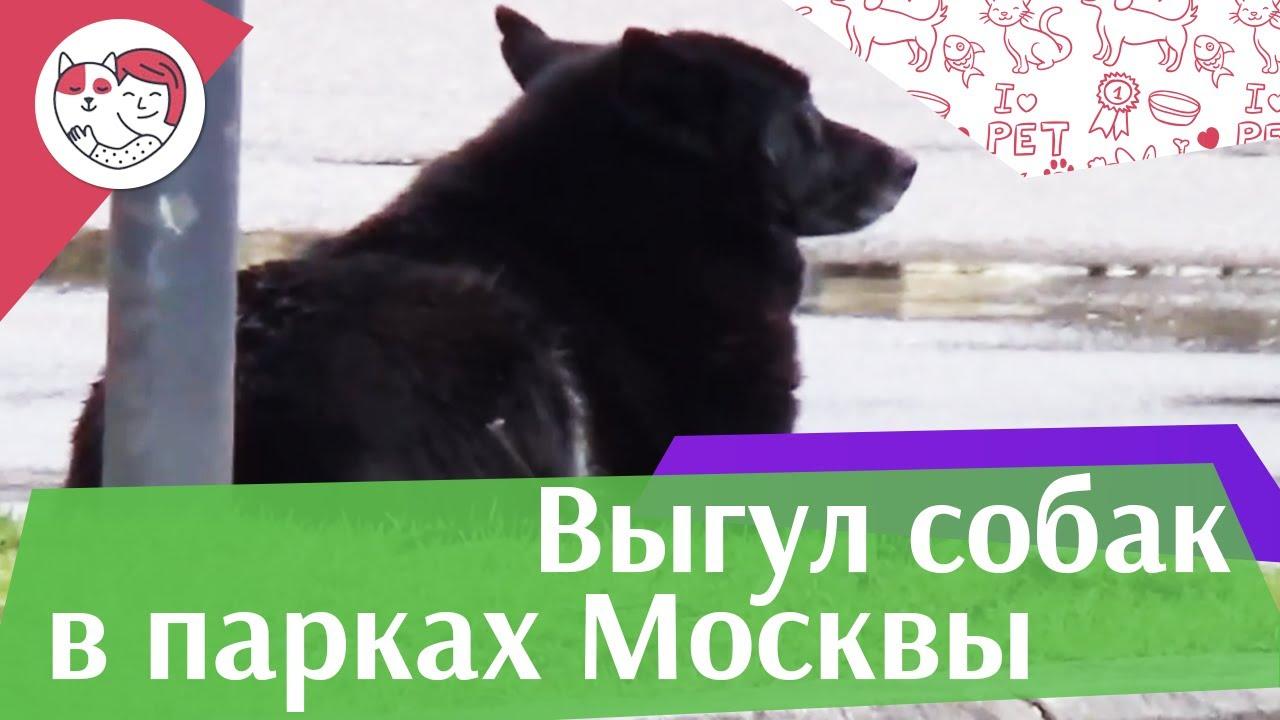 Парки Москвы, которые обязательно нужно посетить с собакой на iliket