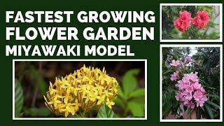 Flower Garden using Miyawaki Technique After 1 Year