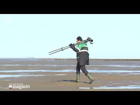 """Videoclip """"Vogelarten im Nationalpark Wattenmeer"""""""