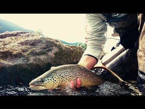 2015 mix fly pesca