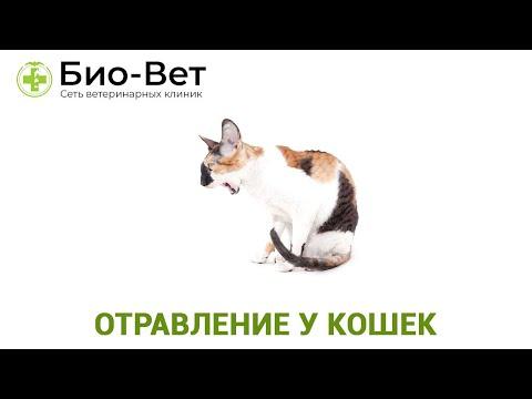 Отравление у Кошек 😿// Симптомы и Лечение // Сеть Ветклиник БИО-ВЕТ