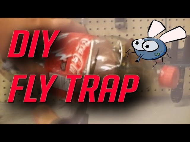 10 Best Mobile Apps For Homemade Fly Trap Homemade Fly Trap Bait