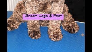 How to groom a Cockapoo - Legs & Feet