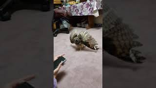 My Pom scared by my Owl