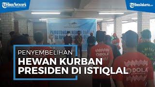 Suasana Proses Penyembelihan Hewan Kurban Presiden Joko Widodo di Masjid Istiqlal