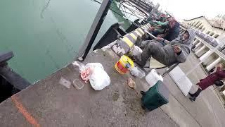 Ловля кефали в черном море на поплавок
