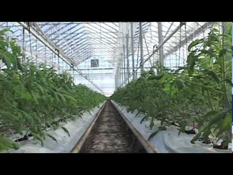 Five Pillars of Food Safety | Toronto Media Co-op