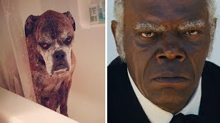 Animals That Exactly Look Like Celebrities And Famous People