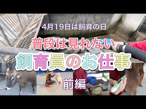 【飼育の日】普段は見れない飼育員のお仕事をご紹介!前編