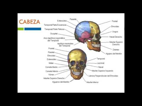 Tratamiento de la columna vertebral en la imagen