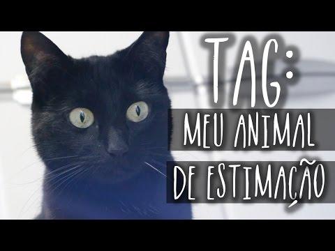 TAG: Meu Animal de Estimação / Explicações