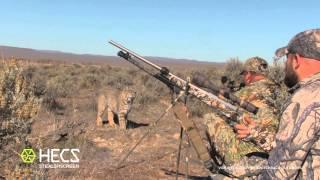 HECS Stealthscreen Bobcat Encounter