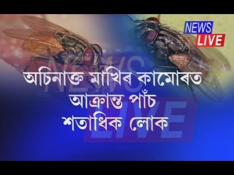 'Poisonous' houseflies creating terror at Amguri!