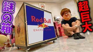 レッドブル公式から謎の超巨大な箱届いたので開封!【RedBull】