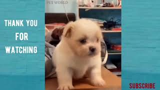 Funny Animals And Cute Pets - #1