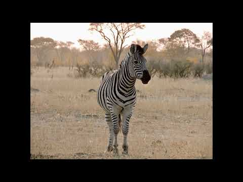 Touring Botswana: A Kwetsani Camp In The Kalahari Desert