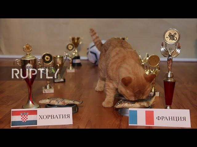 قط تتنبأ بالفائز من نهائي المونديال