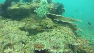 preview picture of video 'Isaw Extreme Photo Bursts of Scuba Dive at Sapi Island, Sabah Malaysia - Part 2.'