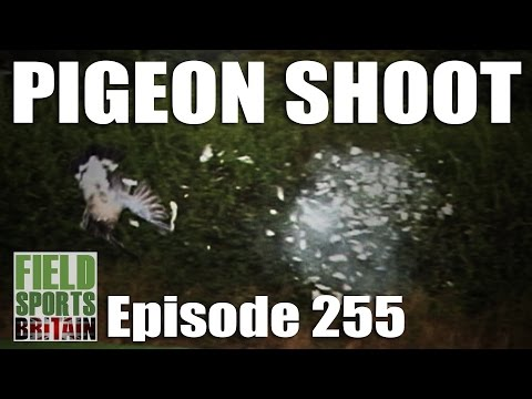 Fieldsports Britain – Pigeon Shoot
