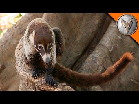 Přátelské posezení s opicemi - Brave Wilderness