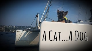 Kid's Perspective: Raising a Dog on our Catamaran