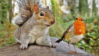 Video for Cats - Squirrel and Robin Fun