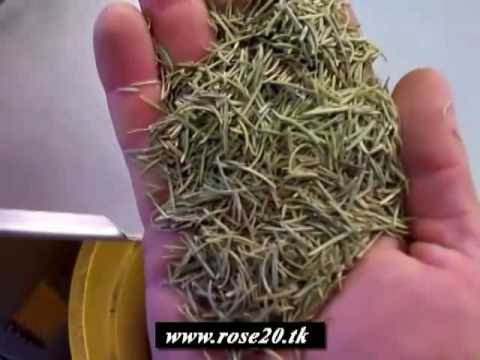 Les traitements avec les herbes de la puissance