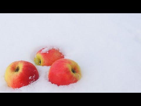 Яблоки на снегу (REMIX)