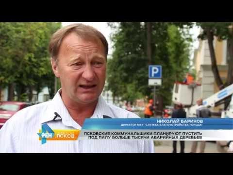 Новости Псков 07.07.2016 # Аварийные деревья