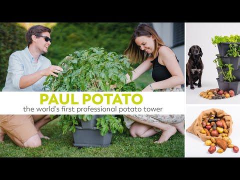 PAUL POTATO - der weltweit erste professionelle Kartoffelturm