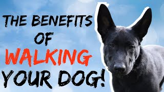 Benefits of walking your dog | Why you should walk your dog