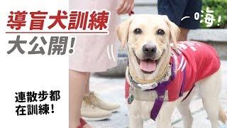 【導盲犬訓練大公開!連散步都在訓練!】狸銘調查室EP.2 志銘與狸貓