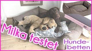 ♡ Milka Mittwoch ♡ Milka testet Hundebetten ♡ KaroLovesMilka