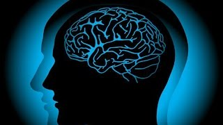 Интересные факты о мозге человека. Школа здоровья 30/08/2014 GuberniaTV