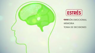 Video de Neuroeducación
