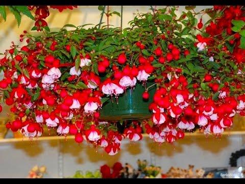 Красивые цветы в подвесных горшках