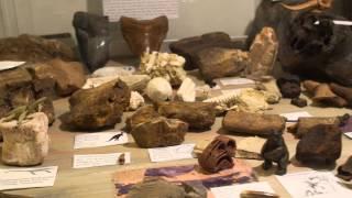 """Thumbnail for video: Presentation av museet """"Den Förhistoriska Världen"""""""
