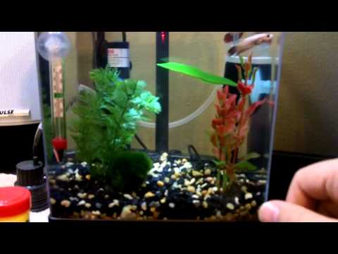 I have a 2 5 gallon tank for my male betta fish i need for Do betta fish need a filter