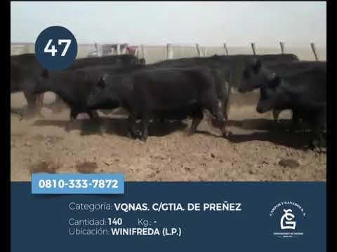 Lote VQ CGP -  Winifreda La Pampa
