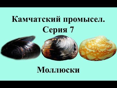 Русская Рыбалка 3.99 Камчатский промысел 7 - Моллюски