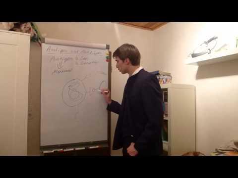 Biologie - Antigene und Antikörper