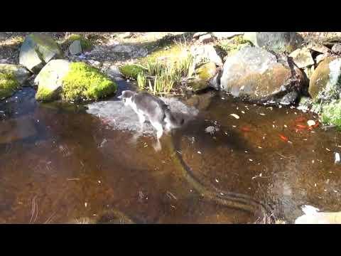 Кошка-рыболов на зимнем озере