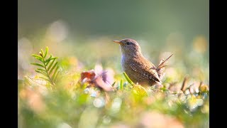 Relaxing Peaceful Instrumental Music, Beautiful Celtic Music with Nature sounds, by Tim Janis