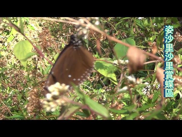 <html> <body> Film for Purple Butterfly2020-1-18 </body> </html>